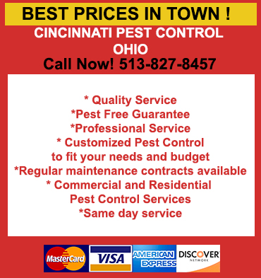Bed Bugs Heat Treatment In Middletown 45005 513 318 3999 Bed